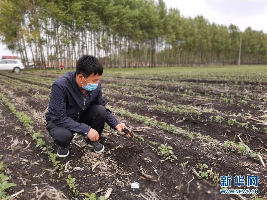 """(在习近平新时代中国特色社会主义思想指引下——新时代新作为新篇章·习近平总书记关切事·图文互动)(6)让每一寸耕地都成为丰收的沃土——我国加强耕地保护推进""""藏粮于地"""""""